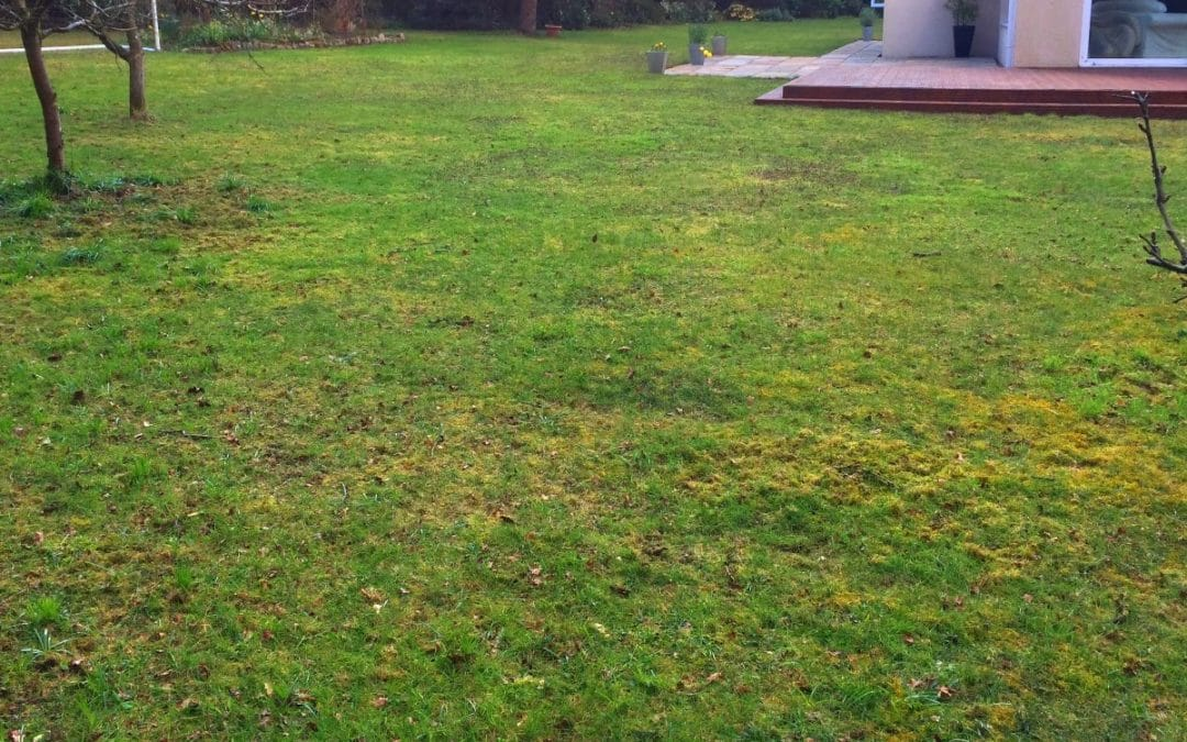 Why Does Moss Grow In Areas Of My Lawn And Not My Grass